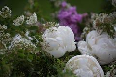 Пионы букета пиона, розовых и белых Стоковые Фотографии RF