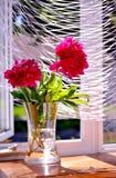 Пионы в вазе Стоковая Фотография