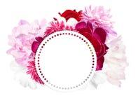 Пионы и круглый ярлык для текста Розовые, белые пионы Стоковое фото RF