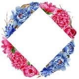 Пионы Wildflower красные и голубые цветут рамка в стиле акварели