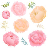 Пион цветков бесплатная иллюстрация