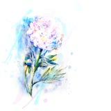 Пион эскиза акварели рука нарисованная на белой предпосылке Стоковое Фото