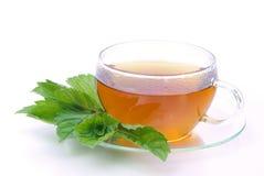 Пипермент чая стоковое фото rf