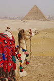 пирамидка верблюда Стоковая Фотография