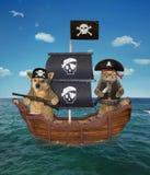 Пират собаки и кошки на корабле стоковые изображения rf