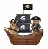 Пират собаки и кошки на корабле стоковая фотография