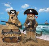 Пират собаки и кошки около сокровищ 2 стоковое изображение