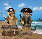 Пират собаки и кошки около сокровищ стоковая фотография rf