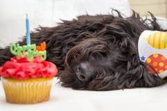 Пирожное при свеча на переднем плане и черная меховая собака лежа на белом стуле нося шляпу вечеринки по случаю дня рождения на з Стоковое Изображение RF