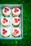 Пирожные с сливк и поленикой Стоковое фото RF