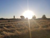 пирофакелы intentionated солнце полдня стоковое фото