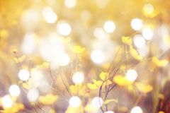 Пирофакел, мягкий фокус Расплывчатый взгляд Запачканный и de сфокусировал желтое цветение и зеленое черенок Стоковое фото RF