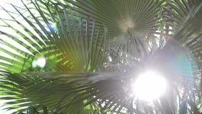 Пирофакел объектива через листья пальмы на времени захода солнца акции видеоматериалы