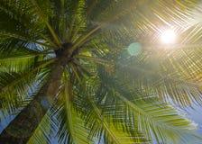 Пирофакел света солнца пальмы стоковое фото rf