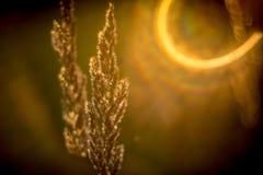 Пирофакел блеска Солнця в луге Стоковые Изображения RF