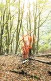 Пирофакел объектива древесин фотографа Стоковое Фото