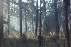 Пирофакел солнечного света Стоковые Фотографии RF