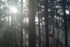 Пирофакел солнечного света Стоковое Изображение