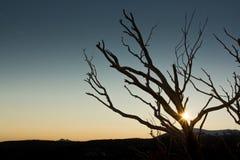 Пирофакел Солнця через чуть-чуть ветви дерева Стоковое Изображение RF