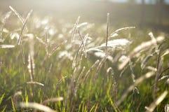 Пирофакел утра в саде Стоковые Изображения RF