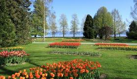 Пиршество тюльпанов весеннего времени, Morges, Швейцария Стоковое Изображение RF