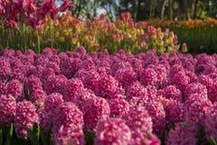 Пиршество цветков Стоковое Фото