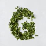 Письма алфавита от листьев Стоковые Изображения RF