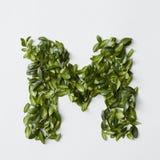 Письма алфавита от листьев Стоковые Фото
