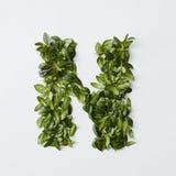 Письма алфавита от листьев Стоковое Изображение