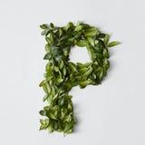 Письма алфавита от листьев Стоковые Изображения