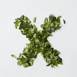 Письма алфавита от листьев Стоковая Фотография