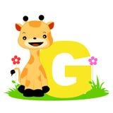 письмо g алфавита животное Стоковое Изображение