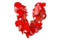 Письмо v сделанное от лепестков красных роз Стоковые Изображения RF