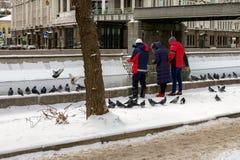 Питание группы людей с утками и голубями хлеба Стоковое Изображение