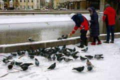 Питание группы людей с утками и голубями хлеба Стоковое фото RF