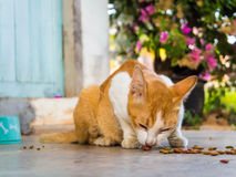 Питание кота Стоковое фото RF