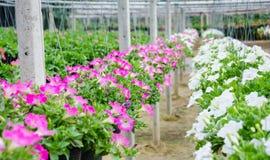 Питомник бака цветков. Стоковое фото RF