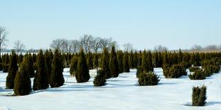 Питомник дерева в зиме стоковое изображение rf