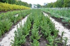 Питомник для растущих деревц лесного дерева стоковое изображение