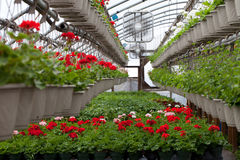Питомник запасенный с цветками Стоковая Фотография RF