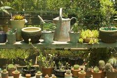 питомник кактусов potted Стоковое фото RF