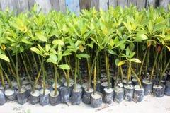 Питомник мангров Стоковое Изображение RF