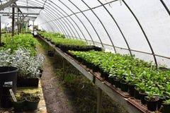 Питомник растя с тоннелем обруча Стоковое Изображение