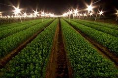 питомник хризантемы Стоковые Фото