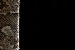 питон Стоковая Фотография RF