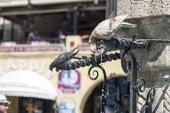 Питьевая вода птиц от фонтана Стоковые Изображения
