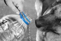 Питьевая вода собаки Стоковая Фотография RF