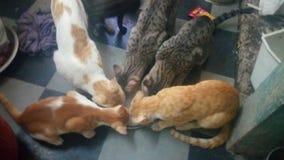 Питьевое молоко котов стоковое фото