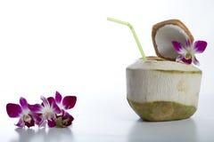 Питье воды кокоса Стоковое Изображение