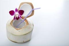 Питье воды кокоса Стоковые Фотографии RF